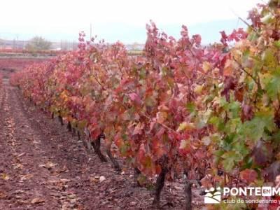 Enología en Rioja - Senderismo Camino de Santiago; cantabria senderismo